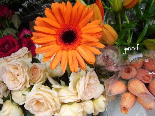 flores de nininha cg