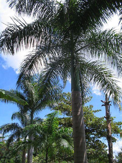 palmeiras dos jardins do convento